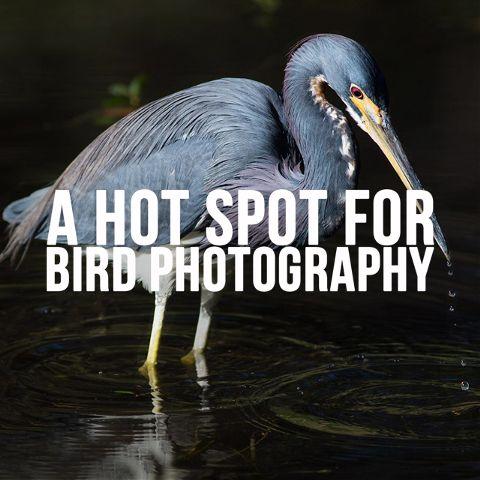 bird photography in Florida