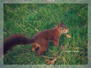 photography cute hellospring pets & animals nature