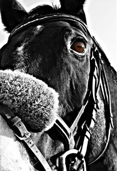 horse eyes beautiful photography hellospring