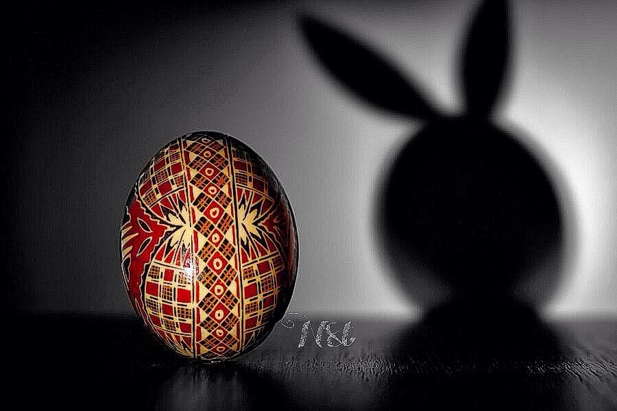 weekly tag #holidaydeco  shadow of bunny rabbit