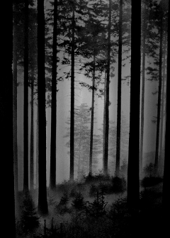 black & white old photo nature photography vintage