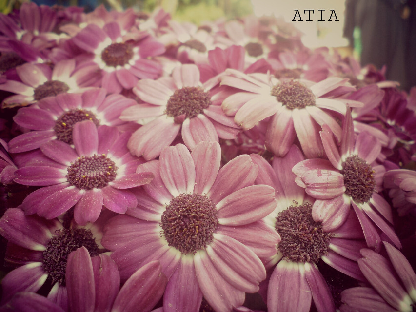 hey! ! flowers r one of the best things to shoot :-)
