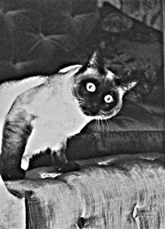 cat cute pets & animals black & white