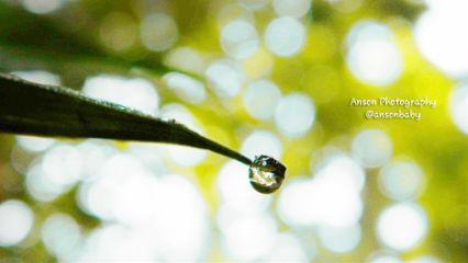 photography nature macro waterdrop