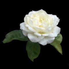 life beautiful flower love emotions