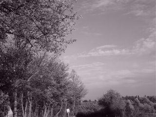 black & white freetoedit nature photography travel