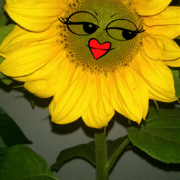 flower nature photography cute