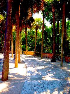 allée viscaya palmier