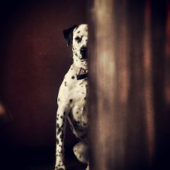 mansbestfriend dog photography petsandanimals