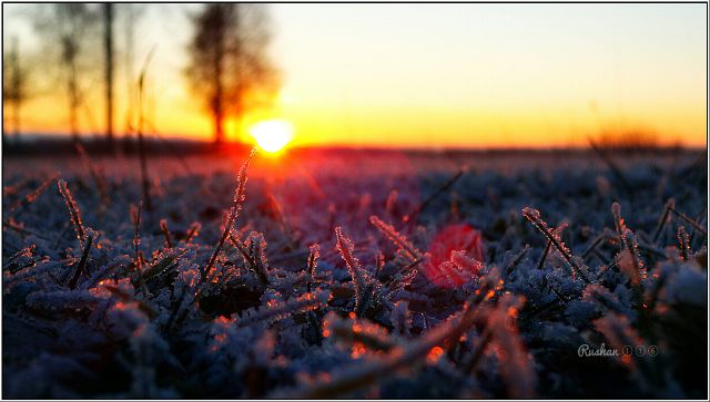 morning frost pictures