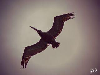 nature love photography birds