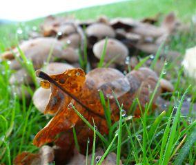 autumn byebyesummer nature travel