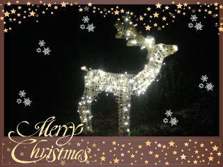 christmas reindeer joulu wapchristmaslights
