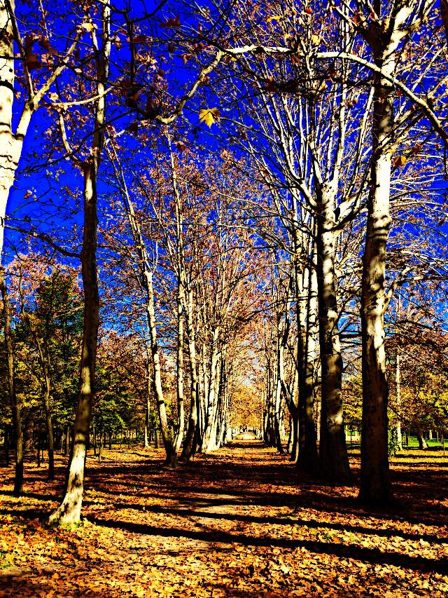 #autumn #forest #spain #path #park