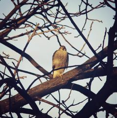 nature animal winter bird petsandanimals