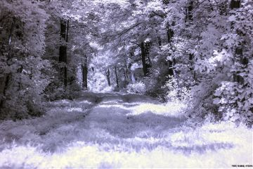 infrared photography landscape trees
