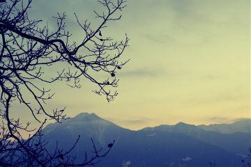 winter sky tree mountains newyear