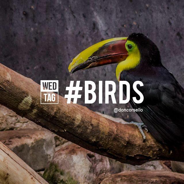 hasht tag birds