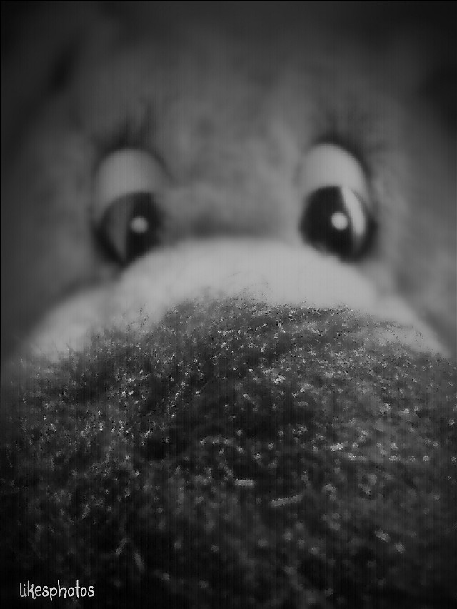 Helloooo and good afternoon  ♡ 😁   I want to have fun. It's a beautiful life. You learn,  you win, you lose, but you get up. Nas   #quotes #emotion #photography #stuffedtoy #reedit #black & white