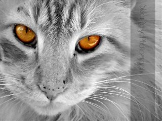 eyes cat petsandanimals color closeup