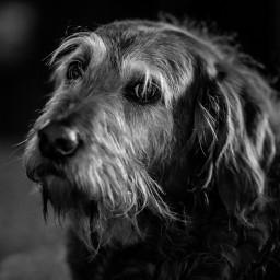 dog sad blackandwhite photography cute animals