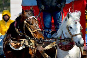 nofilter horse horses